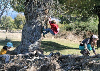 tres niños saltando en un árbol y troncos en la Dehesa de Moralzarzal con el grupo de juego Aúlla